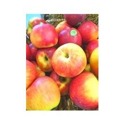 mélange de pommes bio
