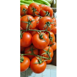tomate grappe bio